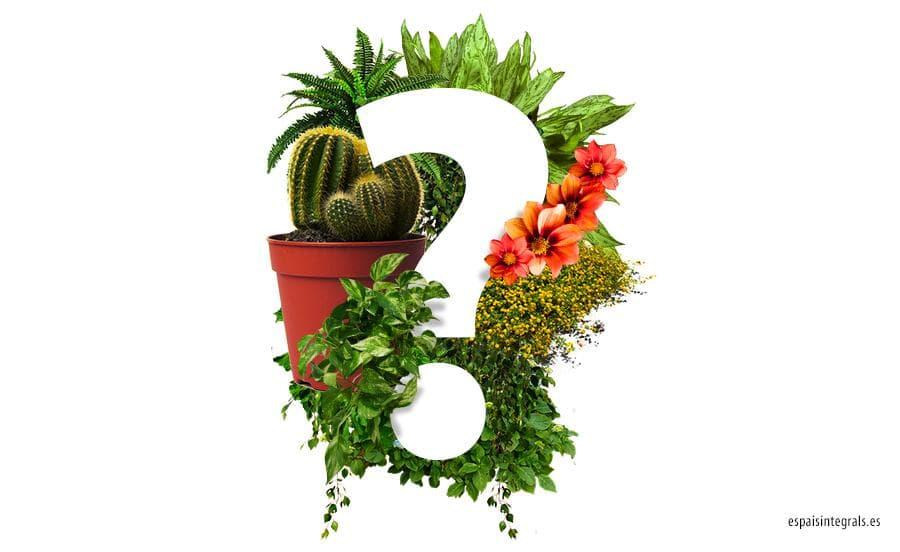 Artículos-¿Cuáles son las mejores plantas para la oficina? - Espais ...